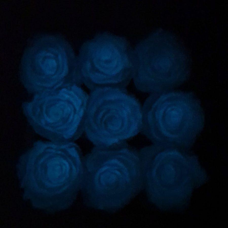 Rose fluorescenti stabilizzate